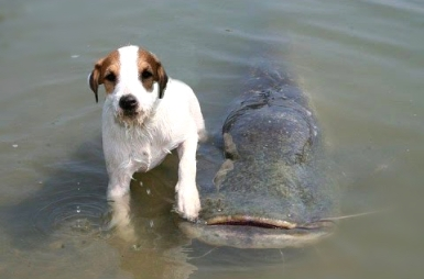 dog and fish