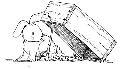 trap-and-rabbit1