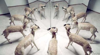 mirrors with animals
