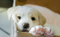 dog_puppy_box_75966_