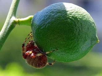 lime and bug