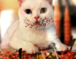 cat sprinkles