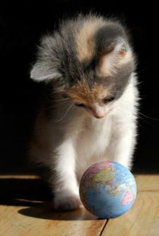 a little kitten behind a world globe. Concept of 'Discovering the world'
