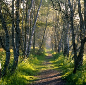 woodland-path-in-sherwood-forest-low-res