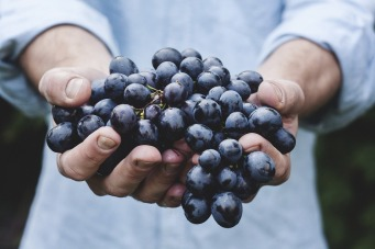 grapes-690230