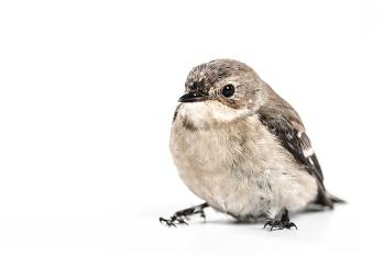 small-bird