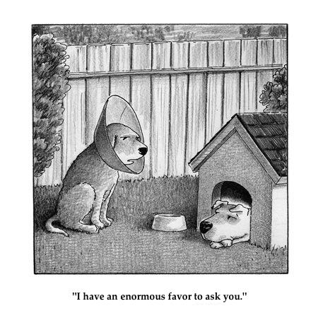 dog favour cartoon