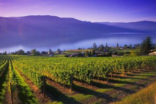 Okanagan-wineries-Gray-Monk