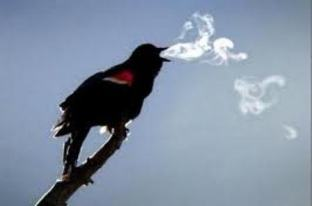 bird-smoke