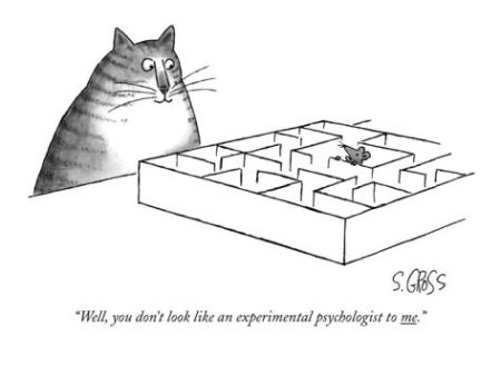 cartoon-cat-mouse-maze