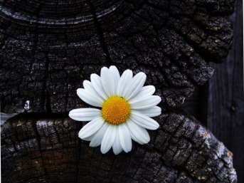 daisy-in-dark-place