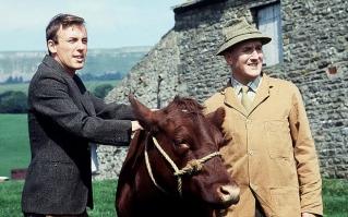 james-herriot-and-cow
