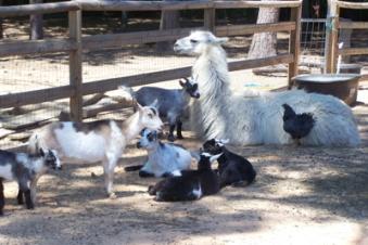 petting-zoo-shot