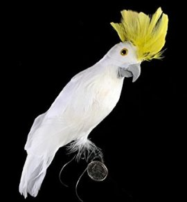 white-yellow-bird-trump