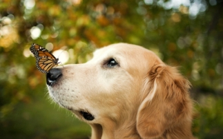dog-with-butterfly