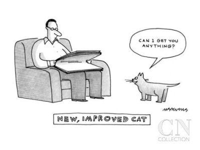 cartoon new cat