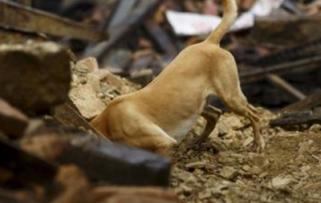 dog rescue nepal