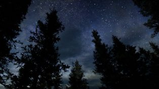 night sky evergreens