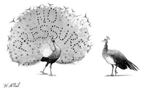 cartoon peacocks