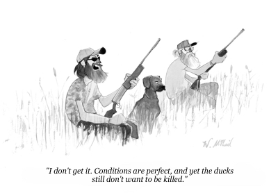 cartoon duck hunting