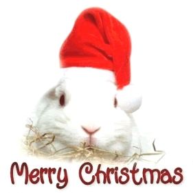 merry christmas rabbit