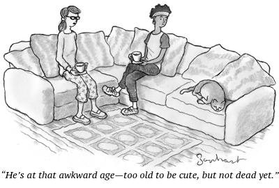 cartoon old cat