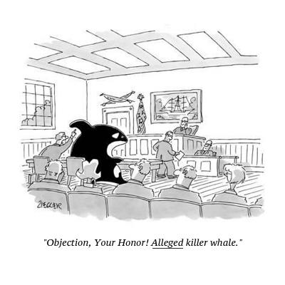 cartoon alleged killer whale